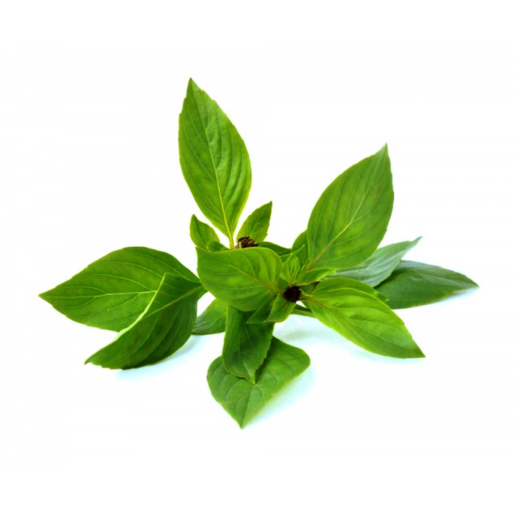 Thai Sweet Basil